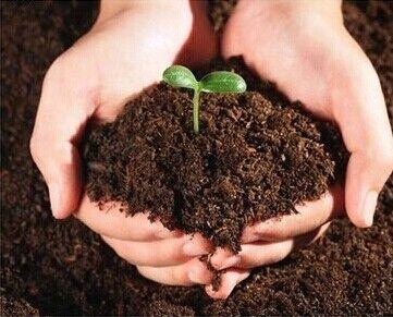 有机肥生产线